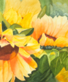 Original watercolor titled Sunflower Breeze by Kay Allenbaugh