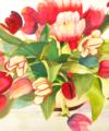 Original watercolor titled Tulip Profusion by Kay Allenbaugh