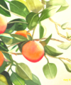 Original watercolor titled Sweet Oranges by Kay Allenbaugh