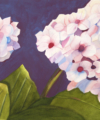 hydrangea flower watercolor painting by kay allenbaugh